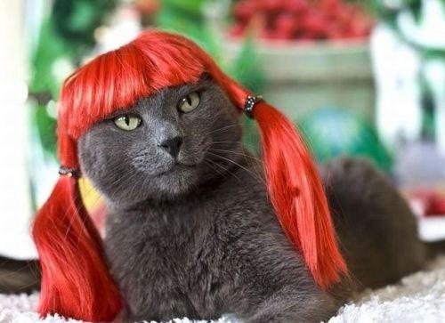 gatos-pelucas-coletas