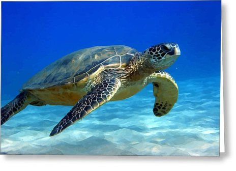 sea-turtle-blue-peter-oconor